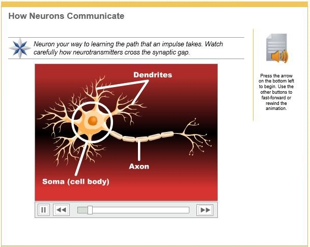 how neurons communicate